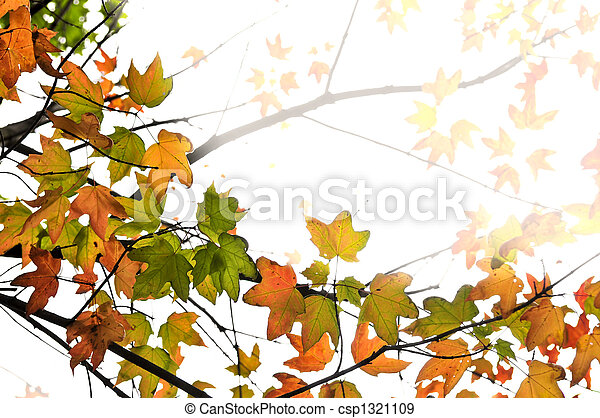 Fall maple leaves background - csp1321109