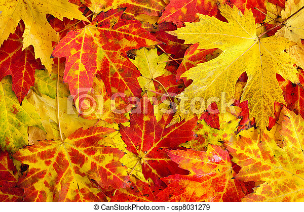 Fall maple leaves background - csp8031279