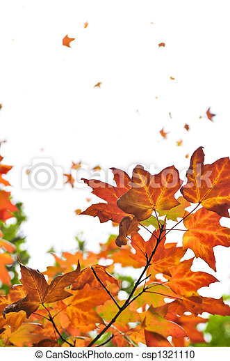 Fall maple leaves background - csp1321110