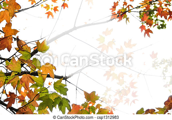 Fall maple leaves background - csp1312983