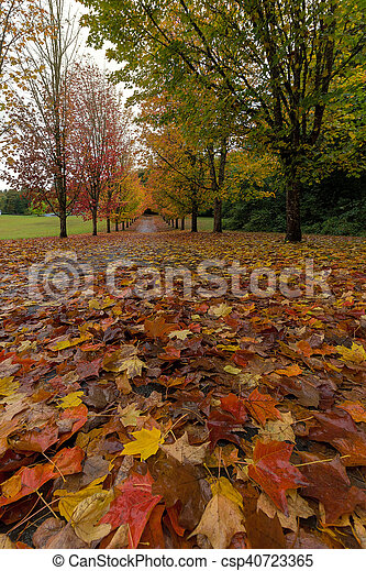 Fall Maple Leaves on Walking Path - csp40723365