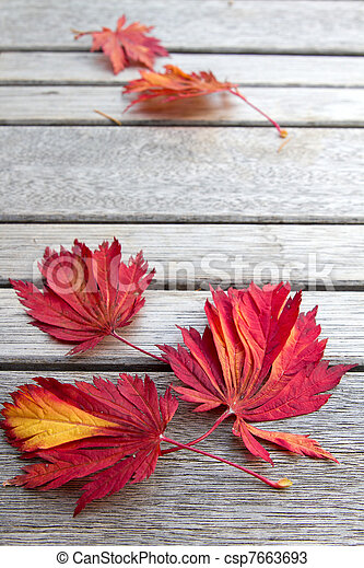 Fall Maple Leaves on Wooden Bench - csp7663693