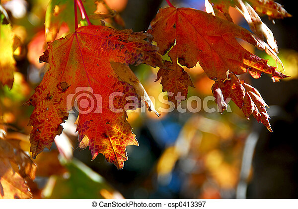 Fall maple leaves - csp0413397