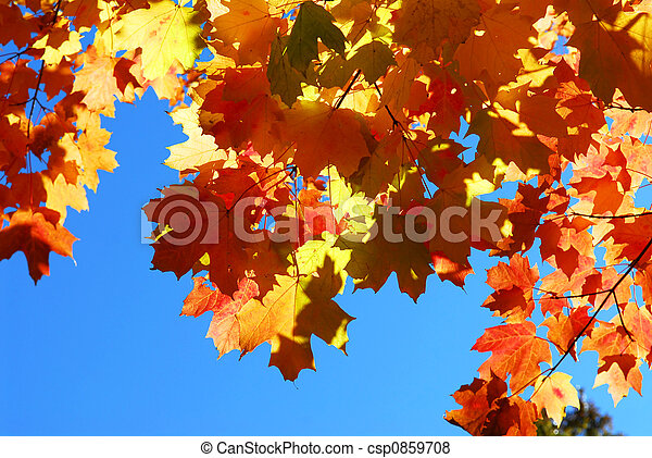 Fall maple leaves - csp0859708