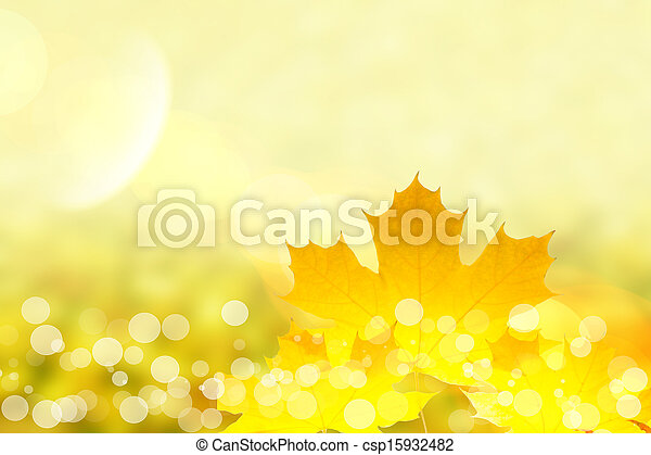 Fall maple leaves - csp15932482