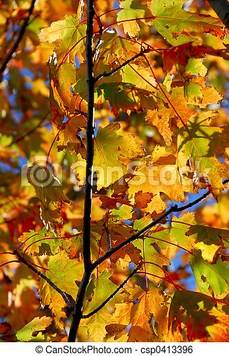 Fall maple leaves - csp0413396