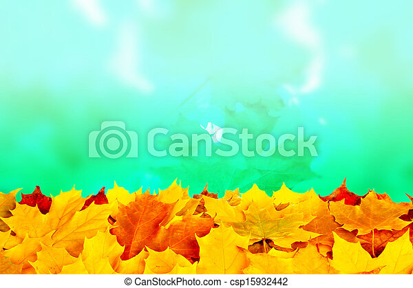 Fall maple leaves - csp15932442