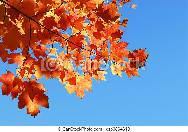 Fall maple leaves - csp0864619