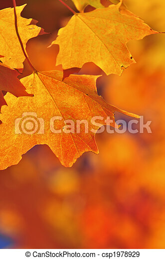 Fall maple leaves - csp1978929