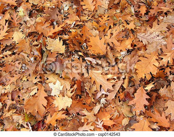 Fall oak leaves background - csp0142543