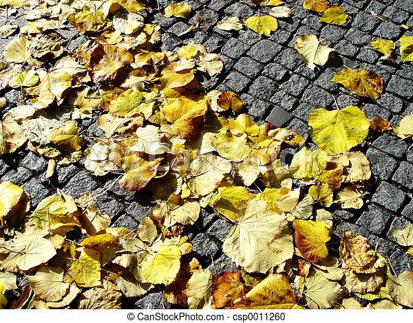 fall on cobblestone - csp0011260