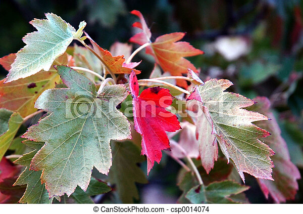 Fall on the way - csp0014074