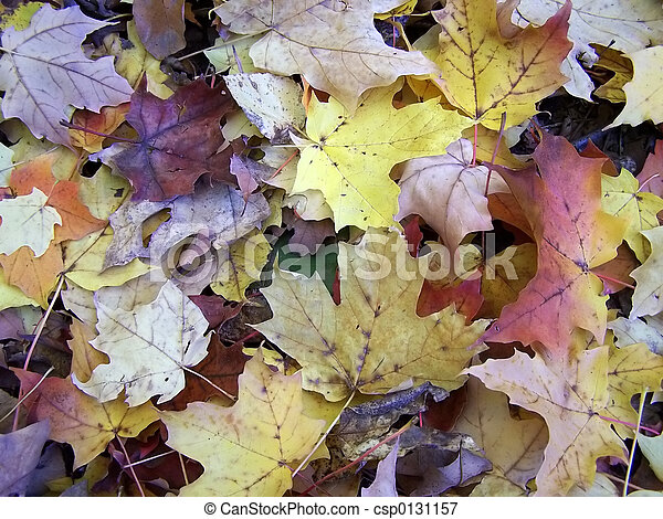 Fall - csp0131157