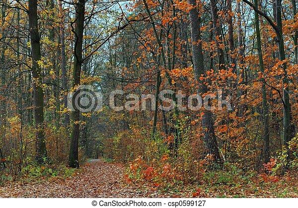 Fall - csp0599127