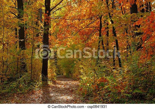 Fall - csp0841931