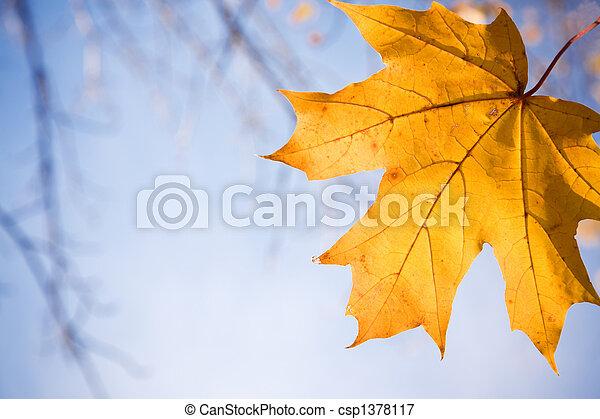 fall - csp1378117