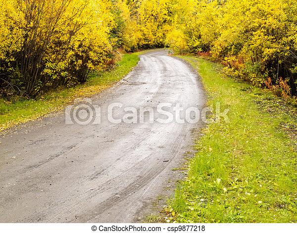Fall rain on rural dirt road thru yellow willows - csp9877218