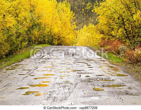 Fall rain on rural dirt road thru yellow willows - csp9877209
