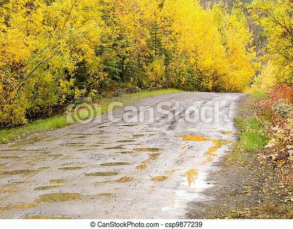 Fall rain on rural dirt road thru yellow willows - csp9877239