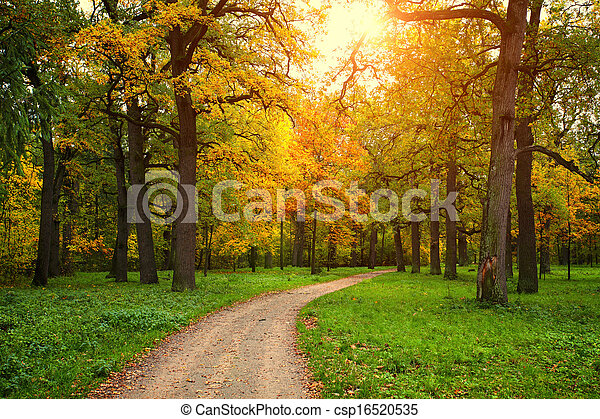 fall season in park with pathway - csp16520535