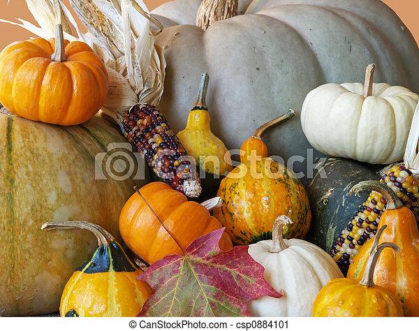 fall squash gourds 2 - csp0884101