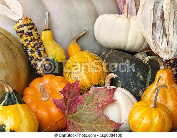 fall squash gourds - csp0884100