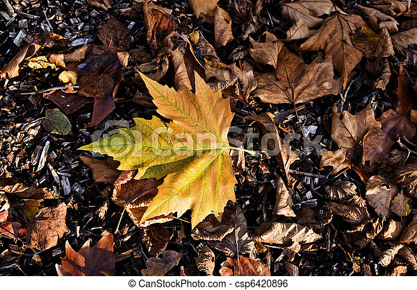 Fall - csp6420896