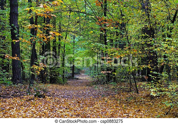 Fall - csp0883275