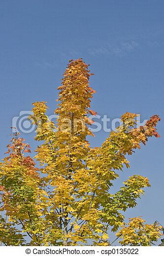 Fall - csp0135022