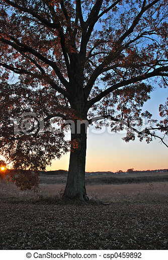 Fall - csp0459892