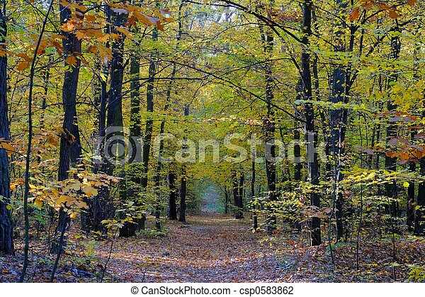 Fall - csp0583862