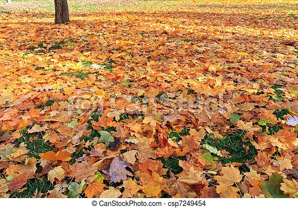 fall - csp7249454