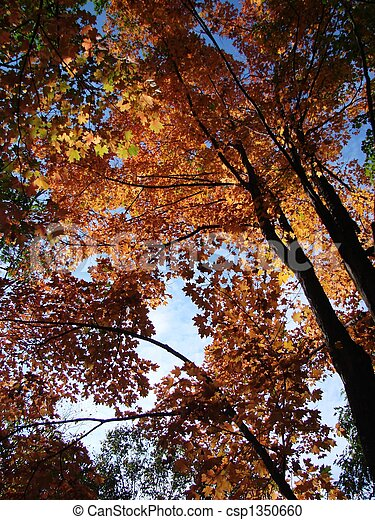 Fall - csp1350660