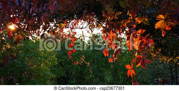 Fall  - csp23677301