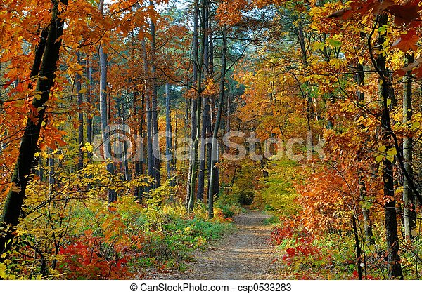 Fall - csp0533283