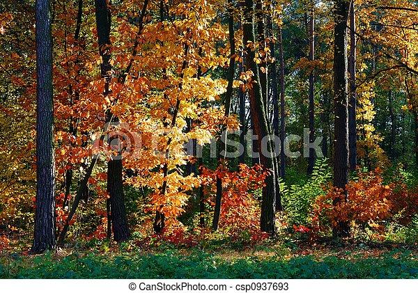 Fall - csp0937693