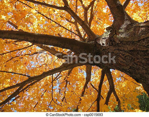 Fall Tree 1 - csp0015693