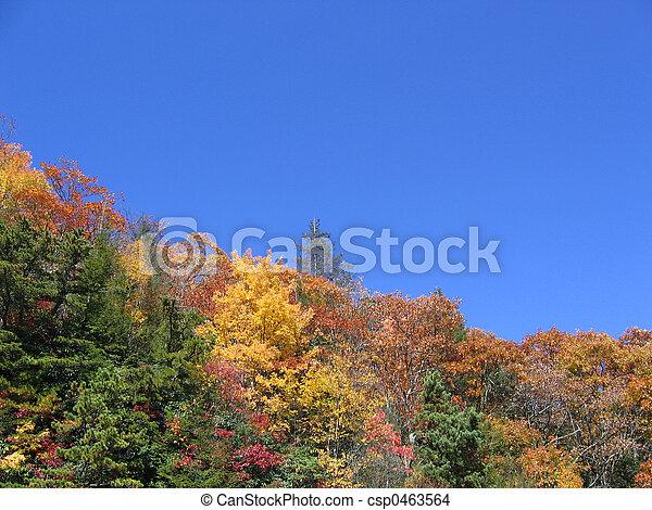 fall trees - csp0463564