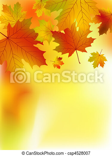 Fall yellow maple leaves. - csp4528007