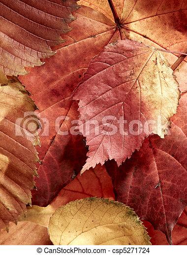 fallen autumn multi-coloured leaves - csp5271724