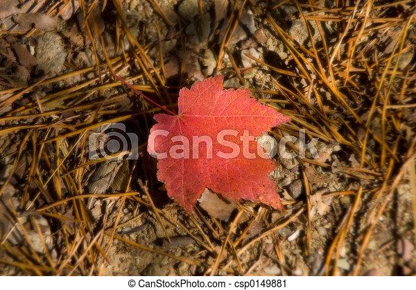 Fallen Leaf - csp0149881