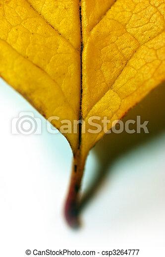 Fallen leaf - csp3264777
