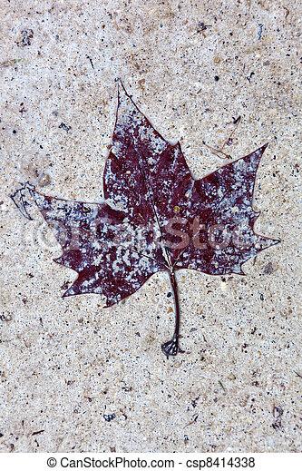 fallen leaf - csp8414338