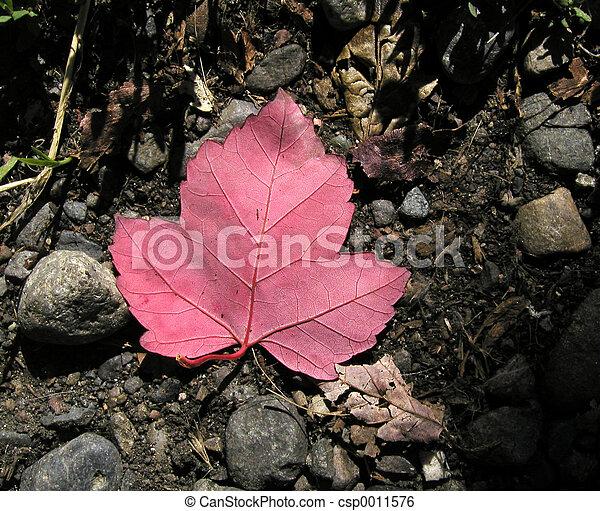 Fallen Leaf - csp0011576