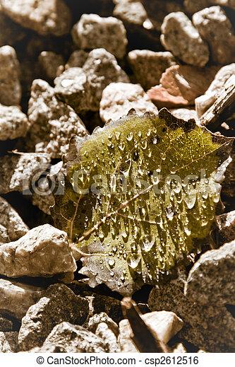 Fallen leaf - csp2612516
