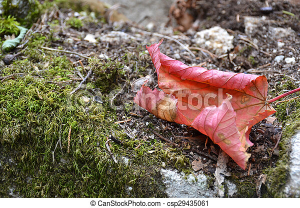 Fallen leaf - csp29435061