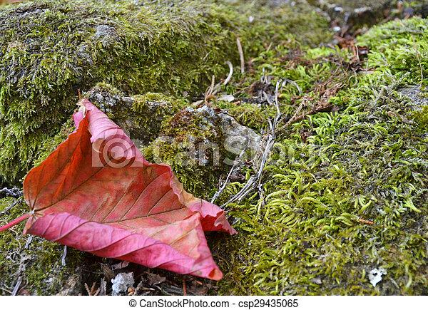 Fallen leaf - csp29435065