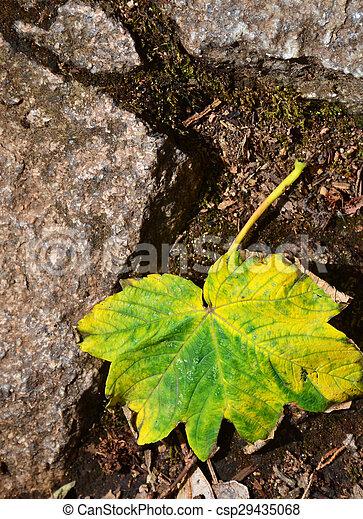 Fallen leaf - csp29435068