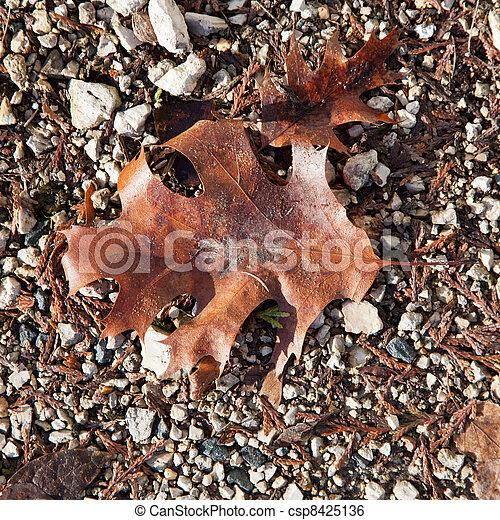 fallen leaf - csp8425136