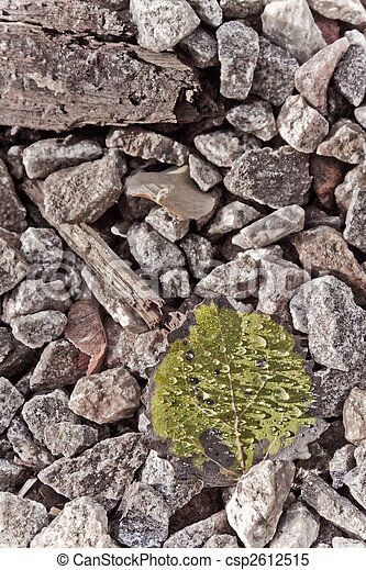 Fallen leaf - csp2612515